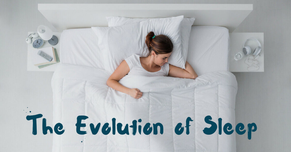 The Evolution of Sleep