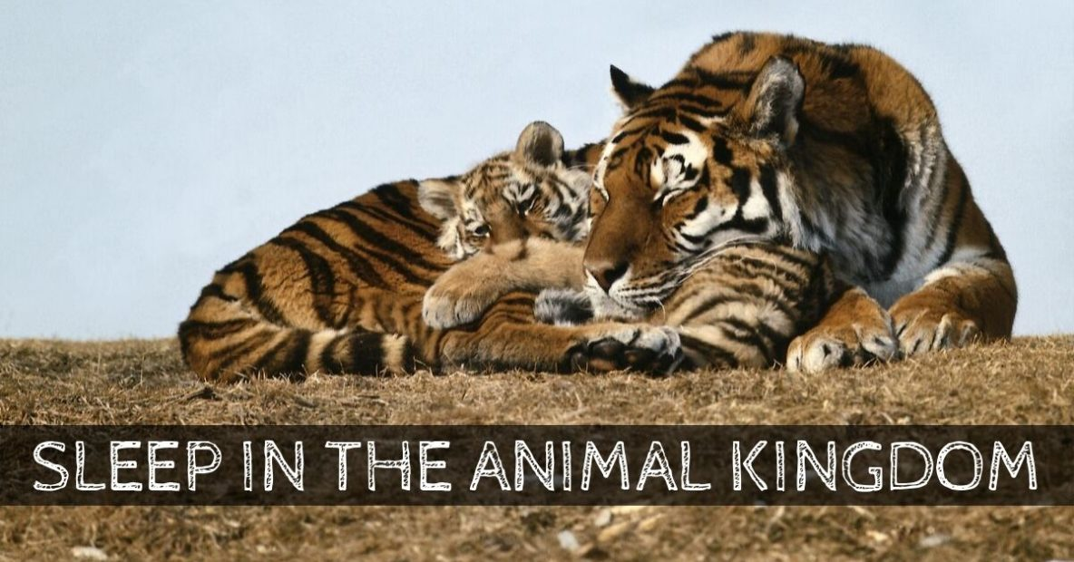 Sleep in the Animal Kingdom